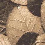 Royal Halı - Yaprak Desenli halı