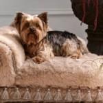 Sassy Pup - Fancy Köpek Yatağı